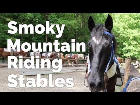The Perfect Pet-Friendly Smoky Mountain Vacation