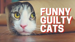 Смотреть онлайн Подборка: Коты чувствуют себя виноватыми