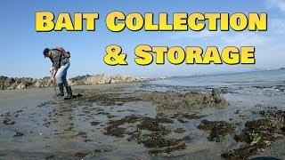 Bait Collection & Storage - Sandeel, Mackerel, Peeler Crab, Razor clam, Ragworm