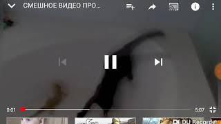 Смешные видео про кошек и котов