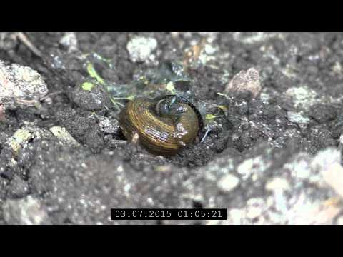 Der Aufbau der Pilze der Parasiten