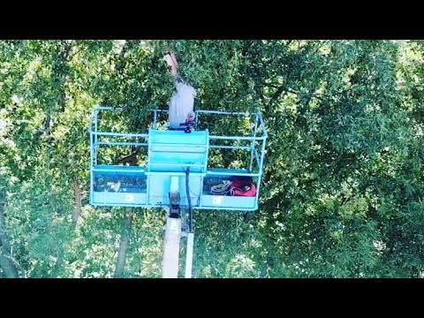 dji-mavic-pro-drone-recovery-from-a-tree