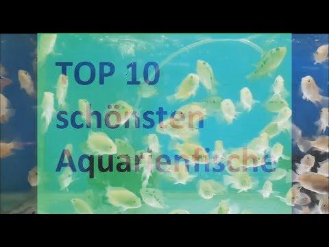 Top 10 schönsten Aquarienfische I Deutsch