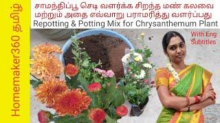 விதவிதமான  சாமந்திப்பூ செடி வளர்ப்பு மற்றும் மண்கலவை | Samanthi Poo Valarpu |Chrysanthemum