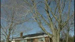 Pruning Trees - Why, What & When