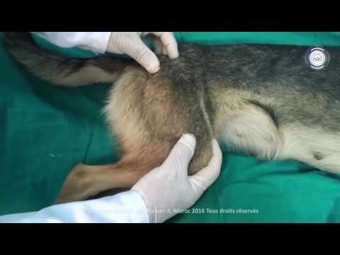 A ciò che il medico per trattare il dolore alla schiena e al torace