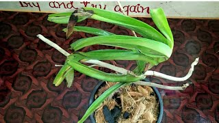 How to care Orchid & Best Potting mix for Orchid