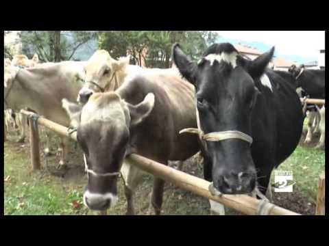 vermi nella foto vitello - 1stauto.ru