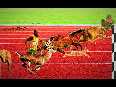 Race of Animals