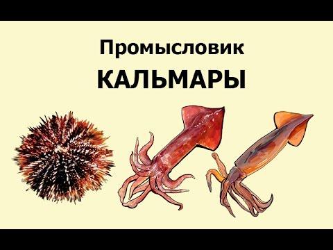 Русская Рыбалка 3.99 Промысловик 8 - Кальмары