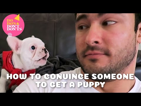 How To Convince Someone to Get a Puppy | Do-do's & Don't-don'ts