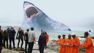 5 Самых Невероятных Случаев в Океане