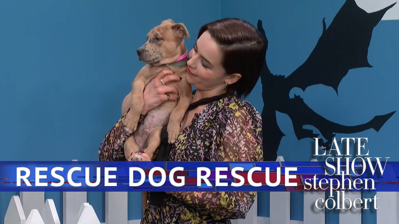 Rescue Dog Rescue: Game Of Thrones Edition With Emilia Clarke thumbnail