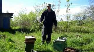 Уроки юного охотника на бродячие рои 1 часть.  «Оснащения ловушки, установка на деревьях»