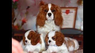 Выбор пола щенка: мальчик или девочка? MY BABY PET. ВСЕ САМОЕ ИНТЕРЕСНОЕ О ПИТОМЦАХ.