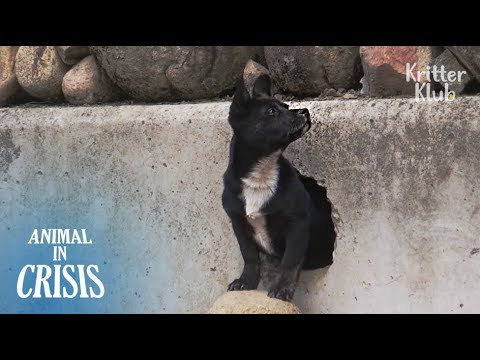 Why Does This Puppy Live In A Tiny Hole That's Only As Big As A Palm? | Animal in Crisis EP82