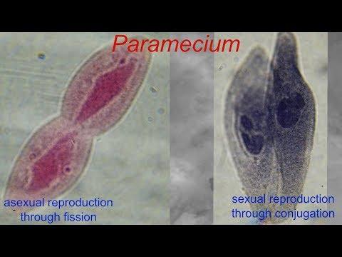 Tumore bocca papilloma virus