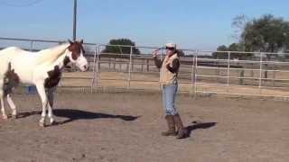Developing Trust & Confidence in the Round Pen: Bandit's 1st week of round penning