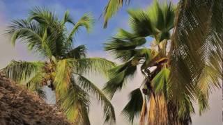 Aruba: Tropical Caribbean Island Holiday