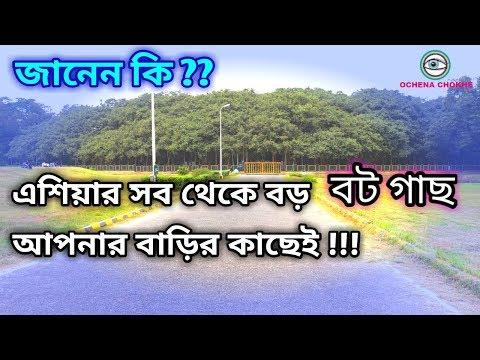 মহা বটবৃক্ষ || The Great Banyan Tree || Botanical Garden | kolkata | guinness world record