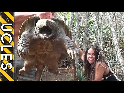 Snapping turtle capture with andrew ucles laura zerra