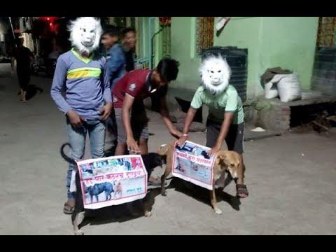 मोकाट कुत्र्यांच्या बंदोबस्तावर नागरिकांचाच उपाय
