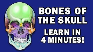 BONES OF THE SKULL - LEARN IN 4 MINUTES