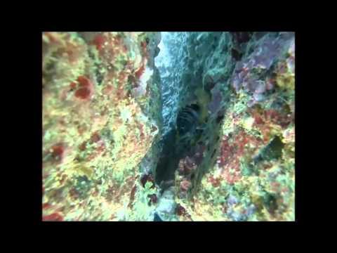 Dive in Corfu Poseidonia Dive Center