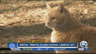 School pays tribute to cat