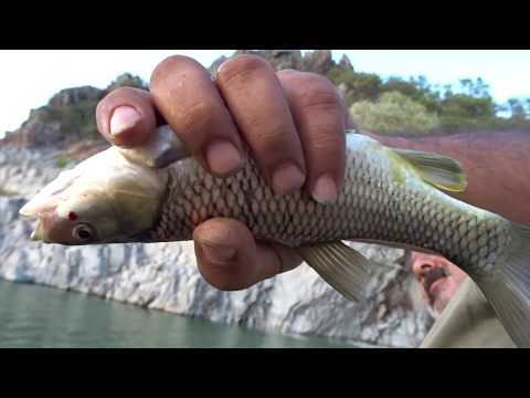Kosova Batlava Gölü Sazan Avı Float Fishing For Carp 9.Bölüm