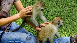Baby monkeys make friends in orphanage | BBC Earth