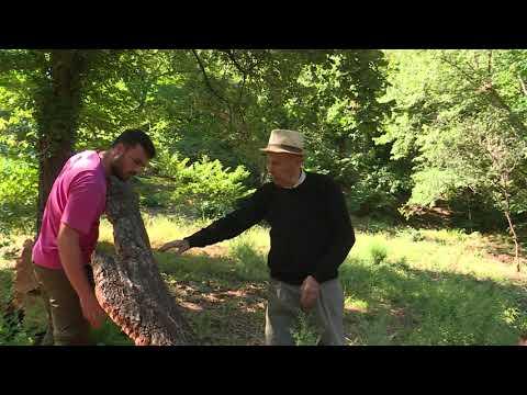 PrioriTerre levée du liège dans la forêt des Maures