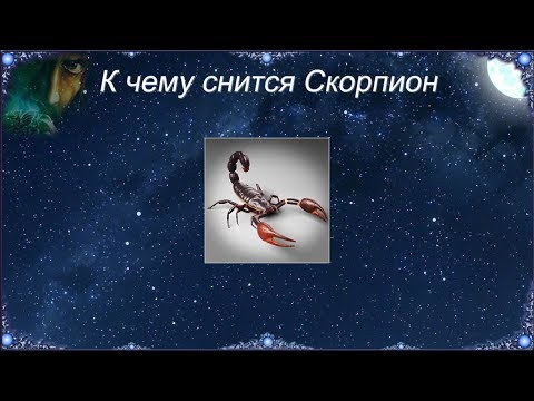 К чему снится Скорпион (Сонник)