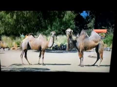 New hump day commercial....