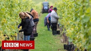 UK Immigration: No visas for low-skilled workers government says - BBC