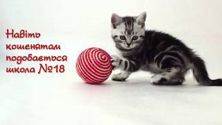 Кошенятам теж подобається школа № 18 в селищі Коцюбинське (Коцюбинское)