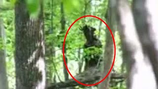 5 Scary Forest Creatures Caught on Camera