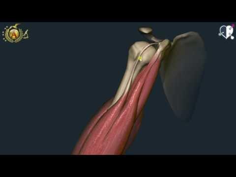 Mal di schiena durante la gravidanza, sdraiato