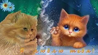 Котята поют Я ЛЮБЛЮ ТЕБЯ