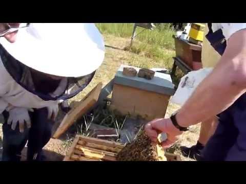 Die Behandlung der Würmer bei gw