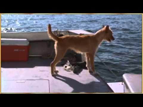 Delfin-Hunde-Freundschaft, Golf von Mexiko,Florida,USA