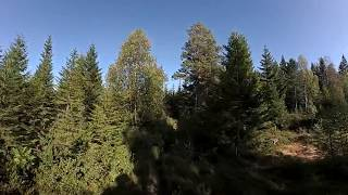 360 Video: Relaxing walk in the forest