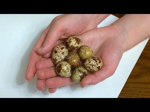 Если Кушать По 3 Перепилиных Яйца В День То Избавишься От...