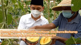borong-melon-di-wisata-green-house-gus-barra-berharap-semakin-banyak-agrowisata-di-mojokerto/