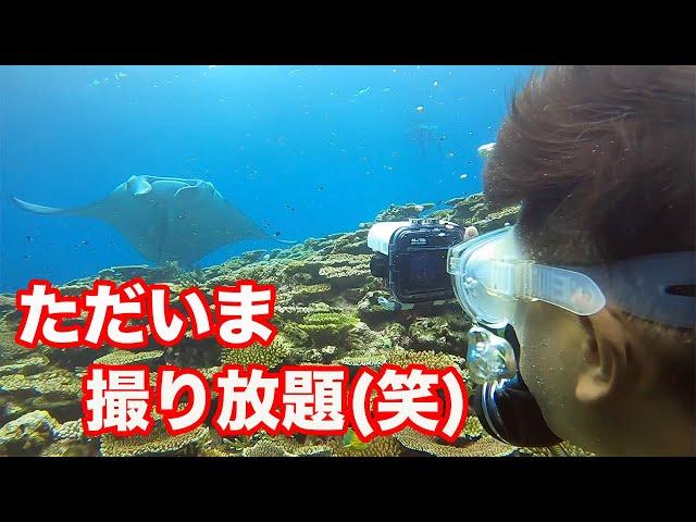 石垣島ダイビング|ルールを守って、正しくマンタを楽しもう!|ビーチライフ石垣島