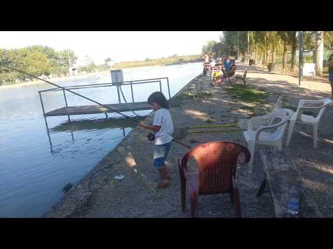 Bilancia fluviale che pesca in regione di Kemerovo