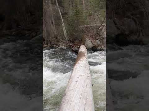 Goose Creek in spring