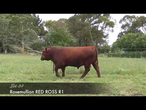 ROSEMULLION RED ROSS (AI) (AMF) (MAF) (NHF) (OSF) HMDR1