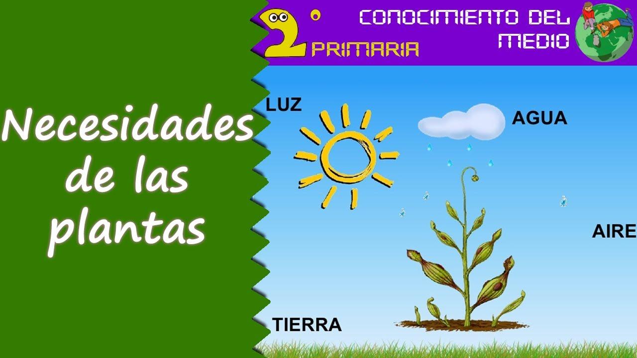Cono, 2º Primaria. Tema 6. Las necesidades de las plantas
