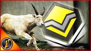First Diamond Mountain Goat!?!